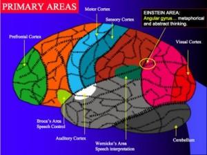 Brain_2-400x300