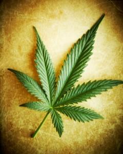 Cannabis leaf on grunge background, shallow DOF.